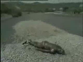 Истина (фильм о геноциде сербского народа после распада Югославии) на 58 минуте я был в шоке